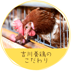 吉川養鶏のこだわり